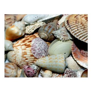 Postal seashells