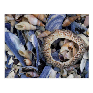 Postal Seashells, Cape Town, Western Cape