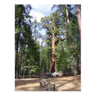 Postal Secoya gigante, parque nacional de Yosemite