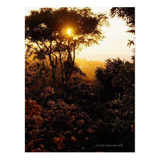 Postal Selva en la puesta del sol, Bali, Indonesia