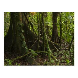 Postal Selva tropical, río Rupununi del norte de Mapari,