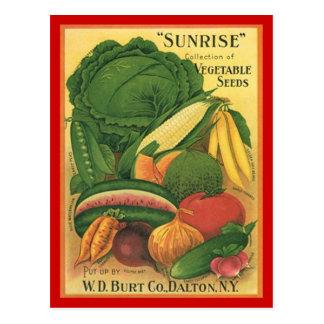Postal Semillas de la verdura de Burt Co de la antigüedad