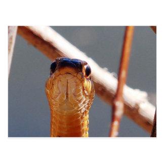 Postal serpiente