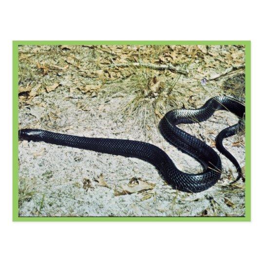 Postal Serpiente de añil
