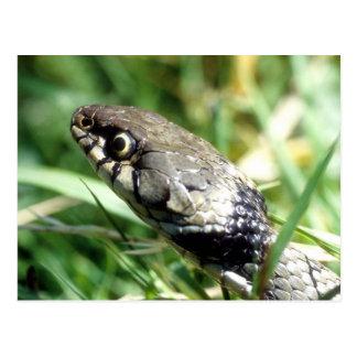 Postal Serpiente de hierba