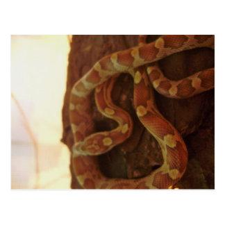 Postal Serpiente de maíz