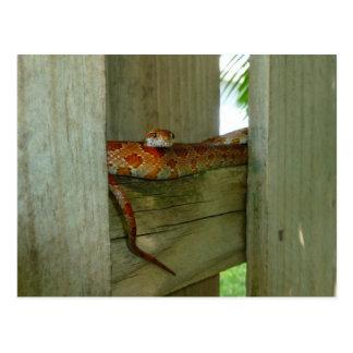 Postal serpiente de rata roja en cabeza de la cerca para