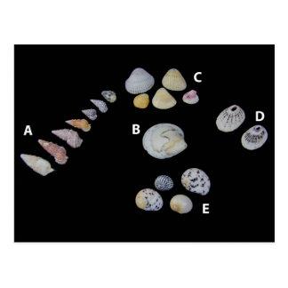 Postal SHUSH el objeto expuesto 20 del museo: Seashells