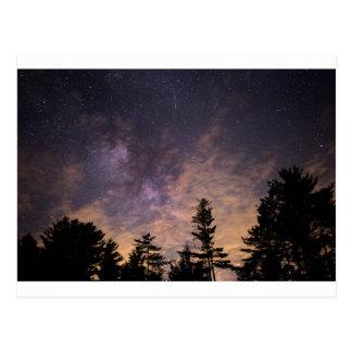 Postal Silueta de árboles en la noche