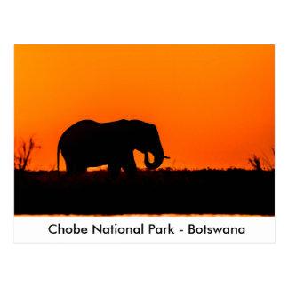 Postal Silueta de un elefante Bull en la puesta del sol