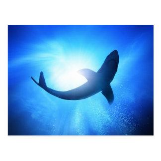 Postal Silueta del tiburón del océano profundo