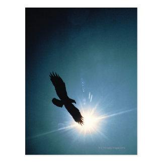 Postal Silueta del vuelo del águila calva en cielo
