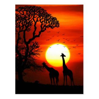 Postal Siluetas africanas de la jirafa de la puesta del
