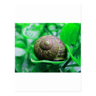 """Postal Soledad (aka """"caracol verde """")"""