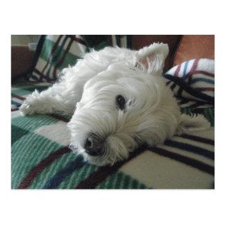 Postal soñolienta de la foto de Westie del sofá