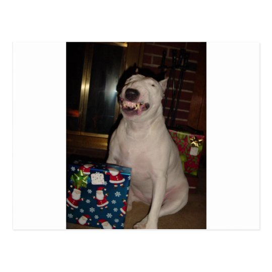 Postal sonrisa bull terrier del navidad