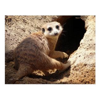 Postal Sonrisa de Meerkat