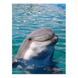 Postal Sonrisa del delfín