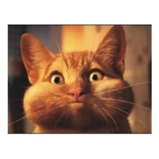 Postal sorprendida del gato