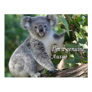 Postal Soy Aussie auténtico: koala australiana mimosa