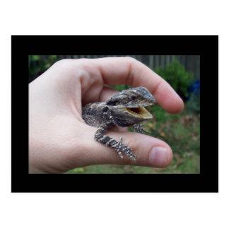 Postal Sr. lizard