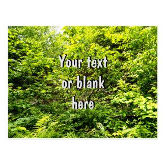 Postal Su texto aquí en un fondo verde del follaje