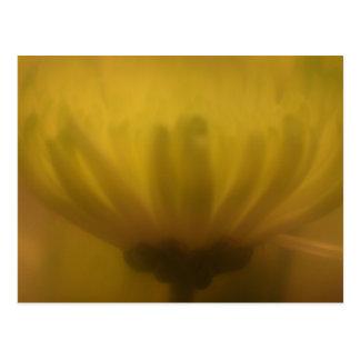 Postal suave de la flor de la lente del foco