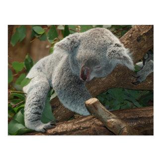 Postal Sueño del peluche de Australia del oso de koala