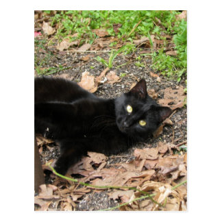 Postal Superviviente de Katrina del gato de la pimienta