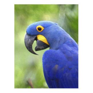 Postal Suramérica, el Brasil, Pantanal. En peligro