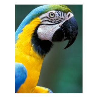 Postal Suramérica, el Brasil, parque de Iguacu Natioanl,