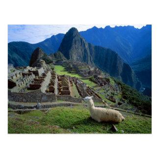 Postal Suramérica, Perú. Una llama descansa sobre una