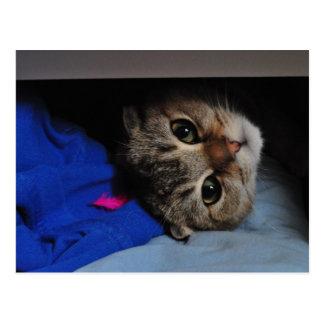 Postal Tallarines el gato en cajón