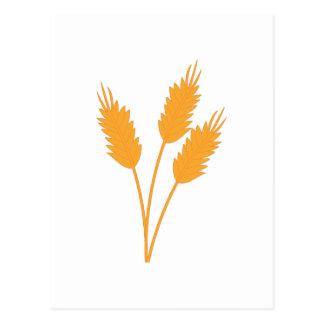 Postal Tallo del trigo