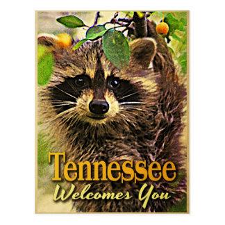 Postal Tennessee le acoge con satisfacción mapache