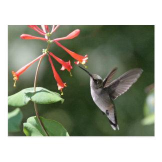 Postal Tesoros del colibrí