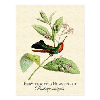 Postal Throated ardiente del arte del colibrí