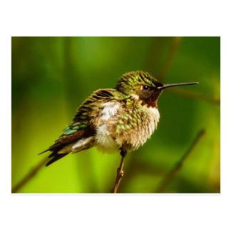 Postal Throated de rubíes del colibrí