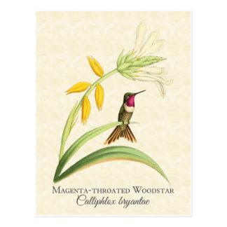 Postal Throated magenta del arte del colibrí