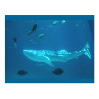 Postal Tiburón de ballena