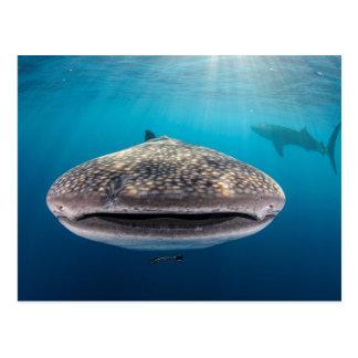 Postal Tiburón de ballena, vista delantera, Indonesia