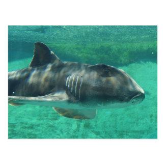 Postal Tiburón de Jackson del puerto