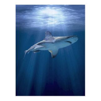 Postal Tiburón que cruza
