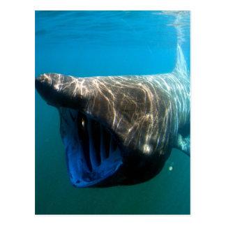 Postal Tiburón que toma el sol
