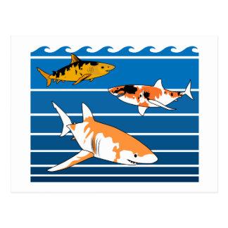 Postal Tiburones de Koi