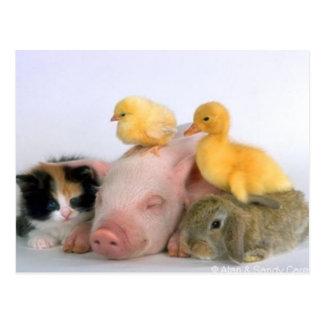 Postal Tiempo de la siesta para los animales