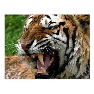 Postal Tigre del rugido