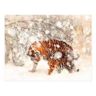 Postal Tigres del invierno