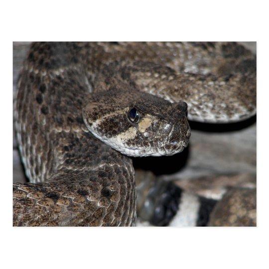 Postal Tiro del primer de la serpiente de cascabel