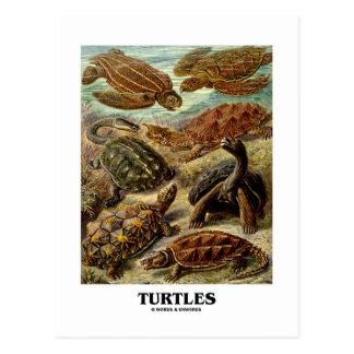 Postal Tortuga (7 diversas tortugas Artforms de